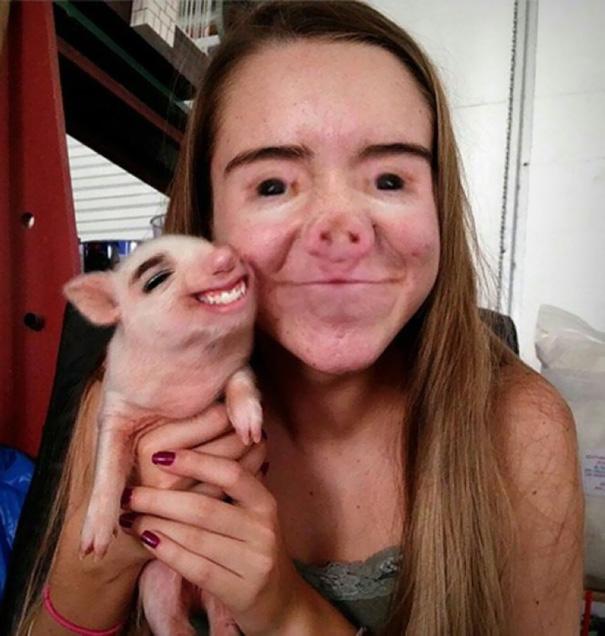 faceswap-avec cochon